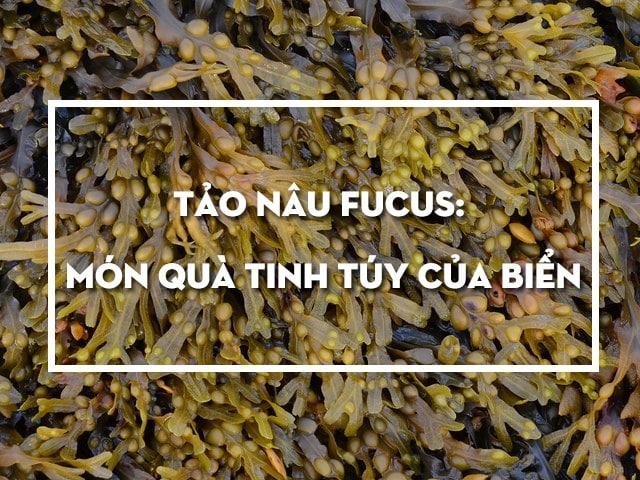 Tảo nâu Fucus